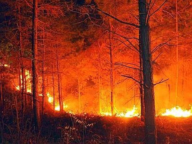 Vendesi boschetto della Plaja, prezzi scontati causa incendio