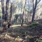 Strage di alberi ai Monti Rossi di Nicolosi
