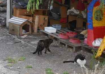 L'associazione Gli altri esclusa dal gattile di Villa Curia