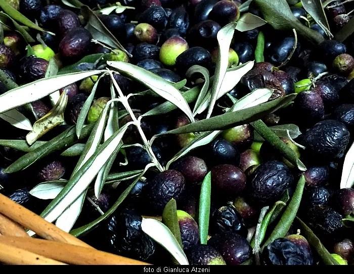 L'olio di oliva non è tutto uguale: classificazione e differenze