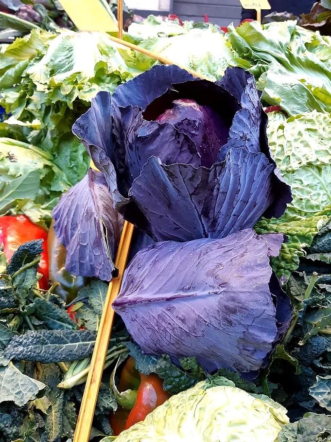 Cavolo viola, di stagione da novembre