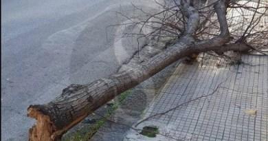 #Barcellona. Tragedia sfiorata in via Kennedy, un albero si schianta al suolo
