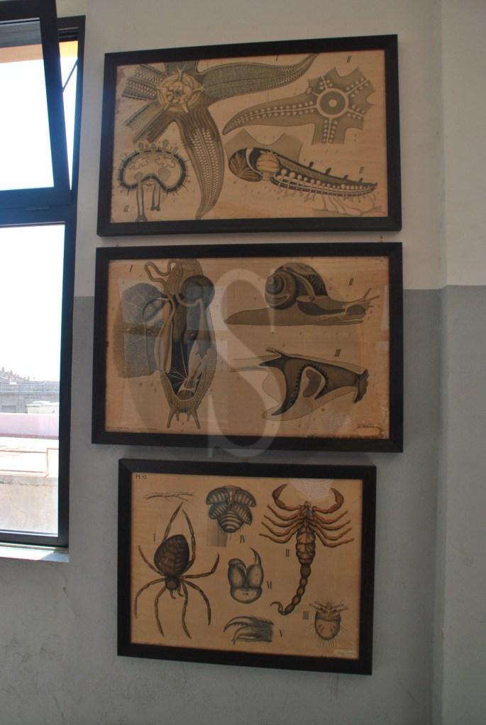 #Messina. Inaugurazione della mostra permanente scientifica al liceo Seguenza