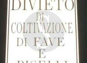 #Messina. Favismo, divieto di coltivazione in via Malatesta