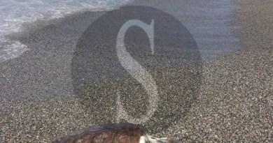 Ambiente, l'OVUD di UniMe diviene Centro di primo soccorso per le tartarughe marine