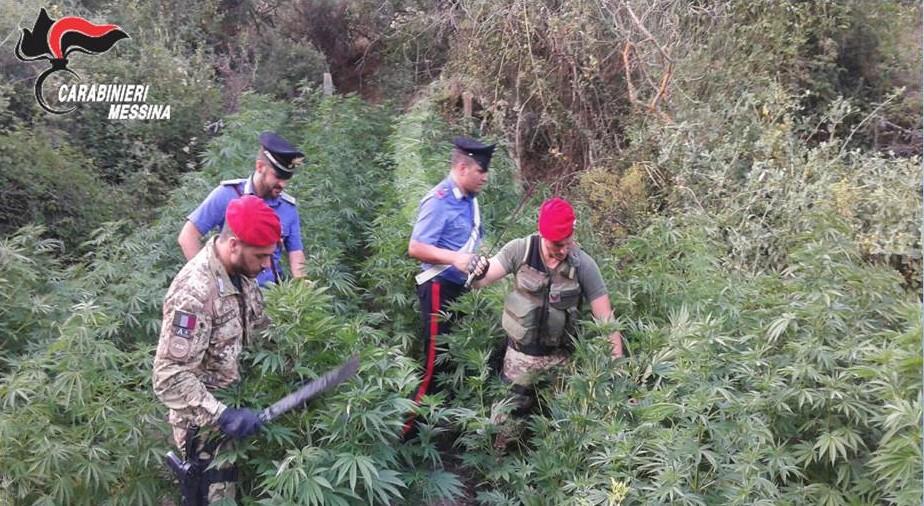 #Nebrodi. Operazione antidroga, sequestrate 500 piante