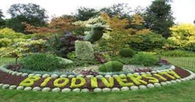 #Ambiente. Il 22 maggio è la Giornata Mondiale della Biodiversità
