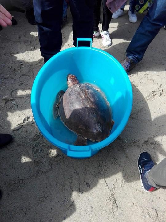 Ambiente. Piccoli alunni di Furnari e Tonnarella liberano in mare una tartaruga Caretta-Caretta