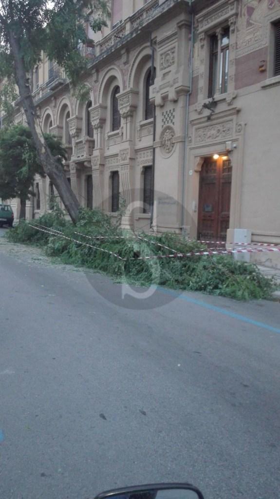 Cronaca. Messina, grosso ramo si spezza in via Aurelio Saffi