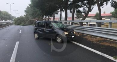 Cronaca. Alberi crollano su auto sulla A20, vigile del fuoco messinese presta i primi soccorsi