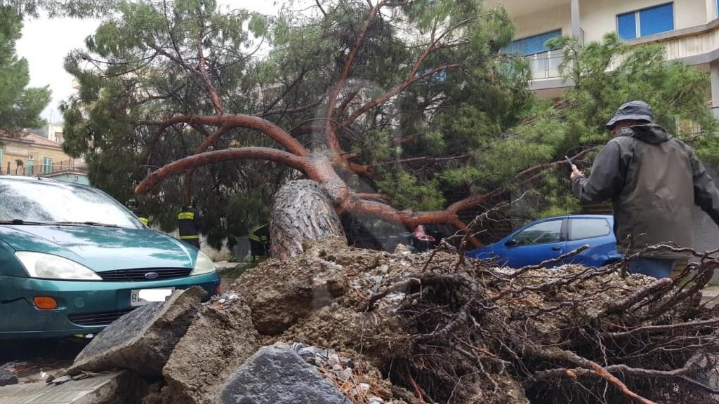 Cronaca. Messina, tragedia sfiorata: albero crolla in viale Regina Margherita
