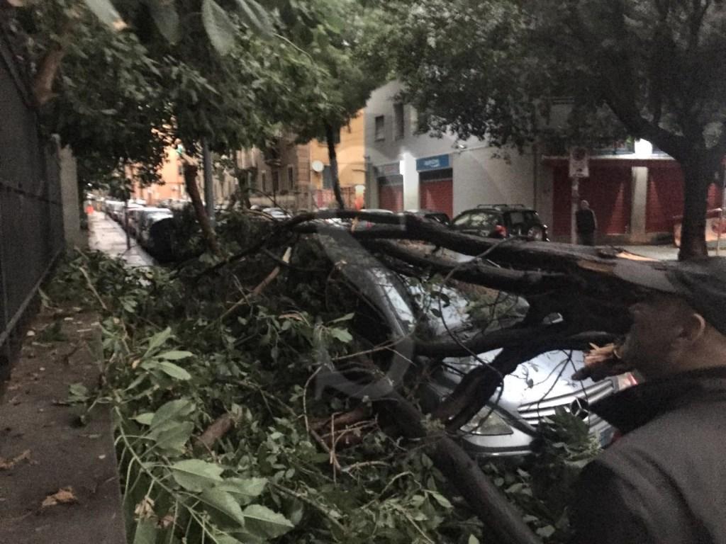 Cronaca. Messina, alberi a rischio: grosso ramo crolla su auto