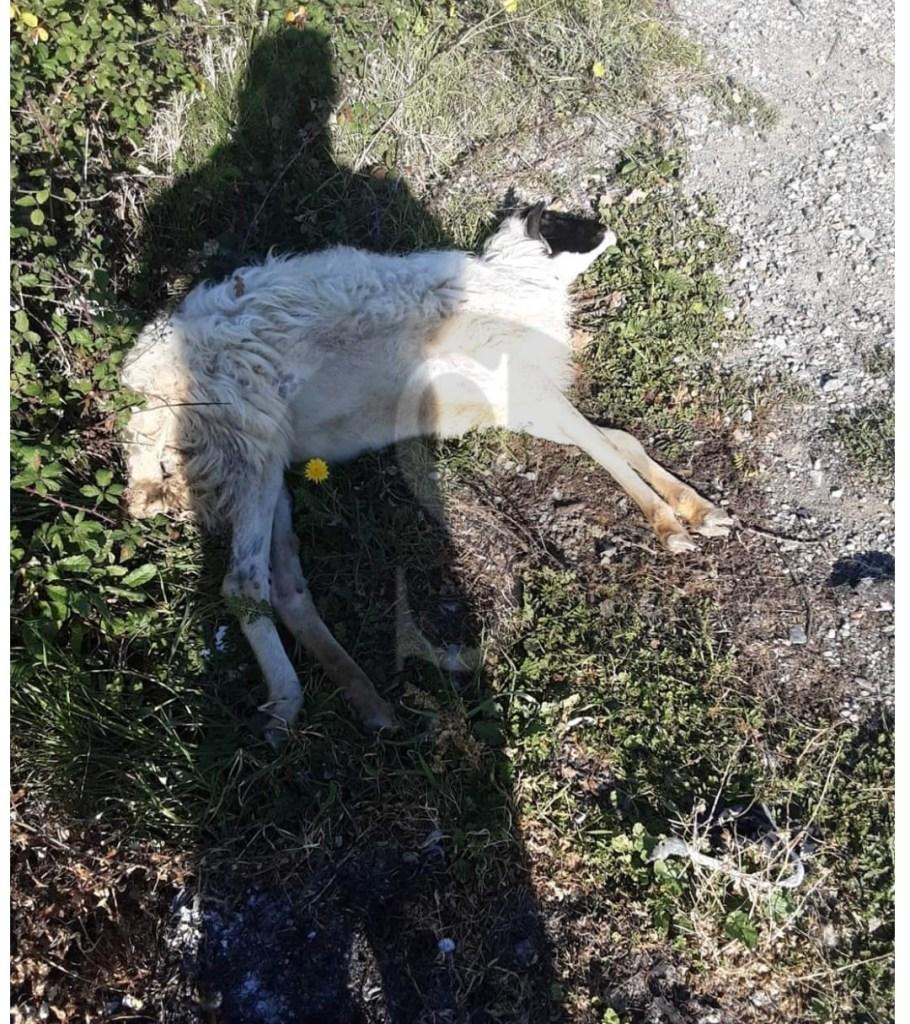 Barcellona PG, allarme salute nell'ex colonia di Acquaficara: carcasse di animali, amianto e rifiuti