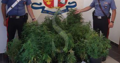 Mazzarrà Sant'Andrea, coltiva 118 piante di marijuana in balcone: i carabinieri arrestano 35enne