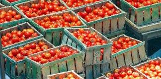pomodorini - portopalo