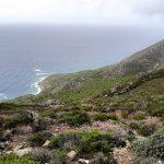 Habitat, il paesaggio della macchia mediterranea: lentisco, mirto, corbezzolo, carrubo