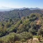Habitat di Sicilia: Il paesaggio della sughera
