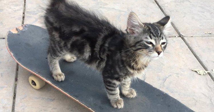 This Skateboarding Cat Is Sending The Internet Wild Sick