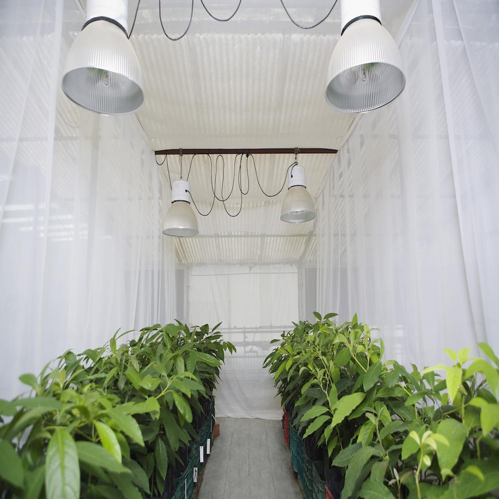 INAIl 2017 prevenzione lavori agricoli in serra