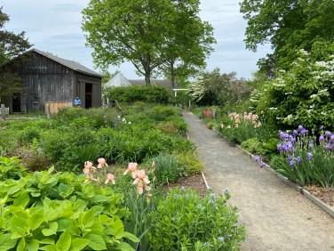 Artists found inspiration in Miss Florence's lush, informal flower gardens.