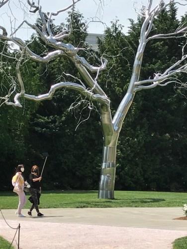 National Arboretum Paine Graft