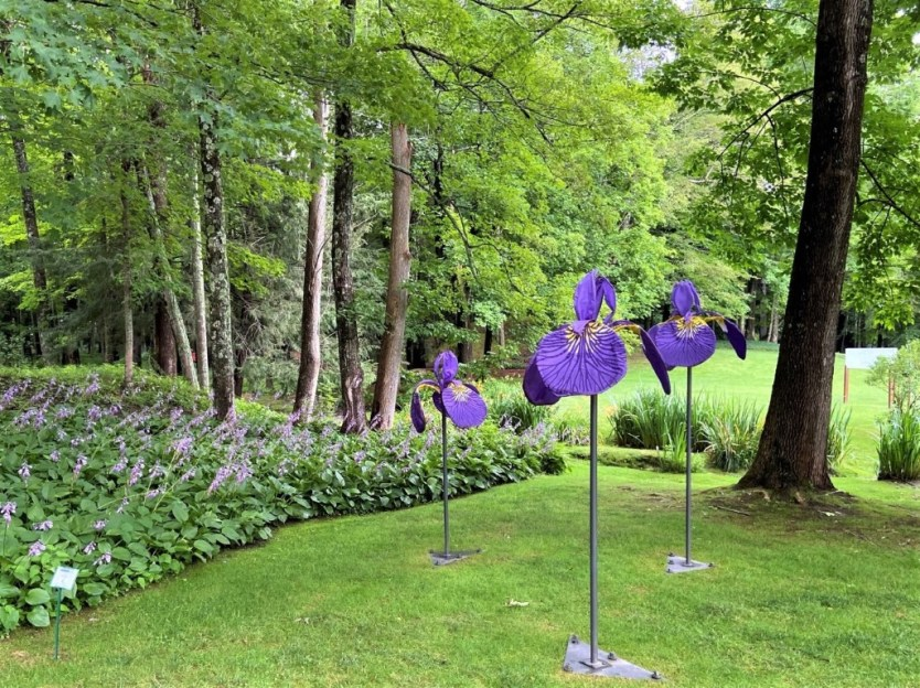 Siberian Irises, a colorful work in nylon and steel by Daina Shobrys, is sited near a collection of hostas at The Mount. It's one work in the SculptureNow exhibition and sale.