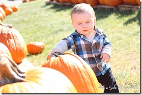 pumpkin-patch-baby-5242
