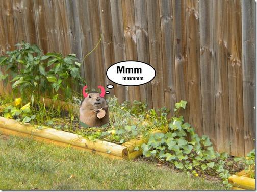 devil groundhog