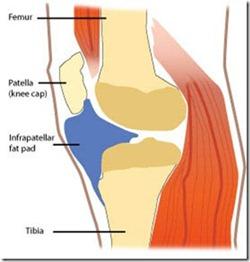 knee fat pad