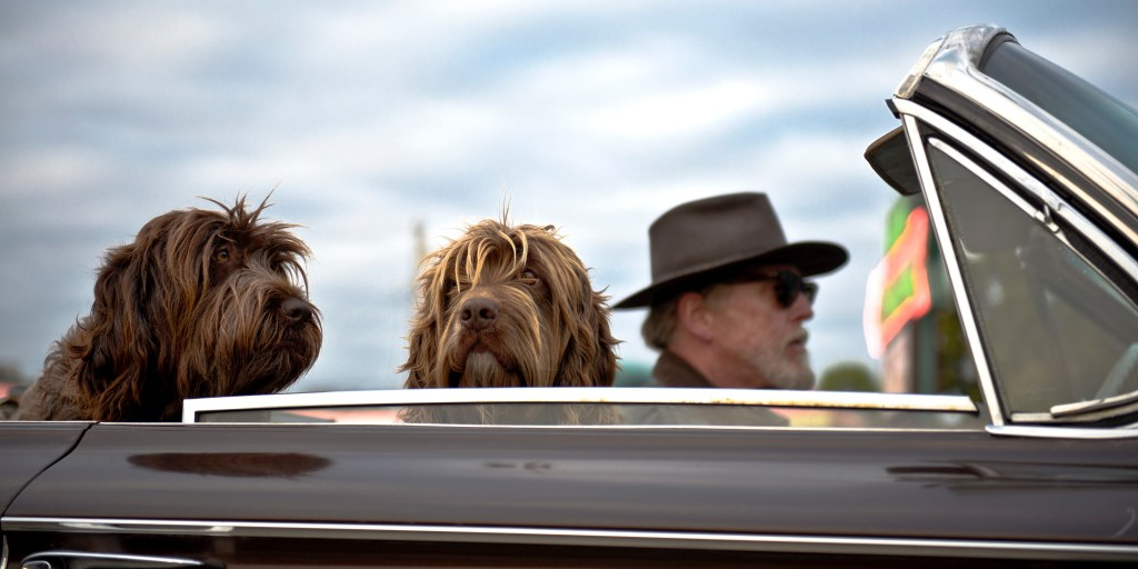 dogs road trips