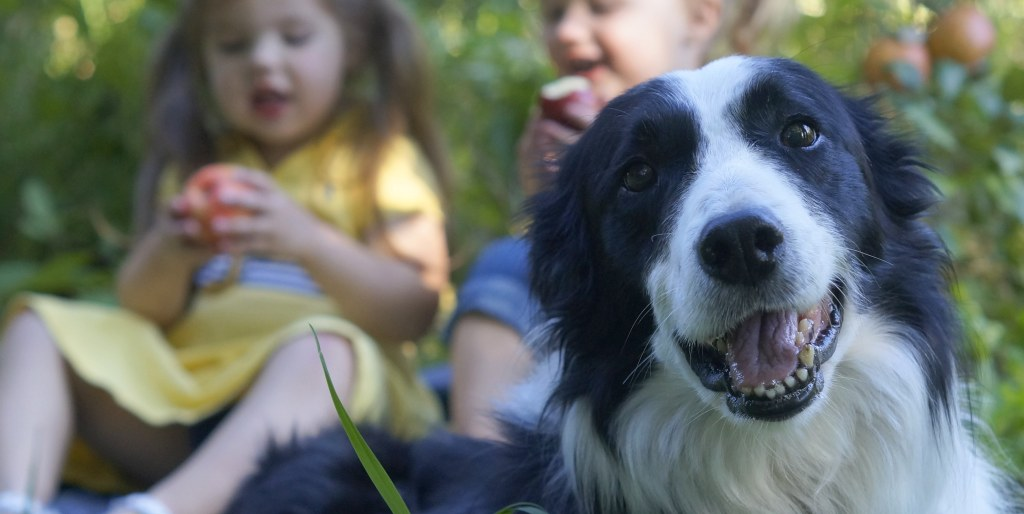 dog-friendly apple orchards mn