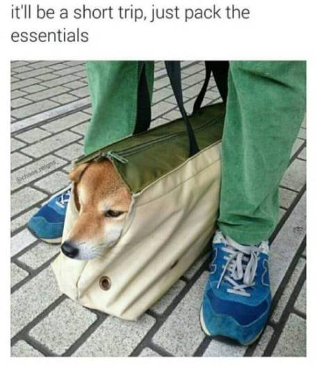 dog meme suitcase