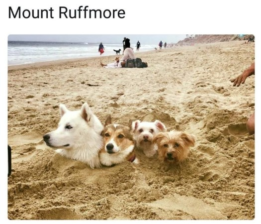 dog meme beach