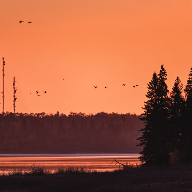 Autumn sunrise over Astotin Lake Islands with Canadian geese flying at Elk Island National Park, Alberta landscape. Copy space horizontal.