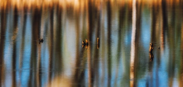 Tree reflections in the water at Elk Island National Park during an early spring morning.