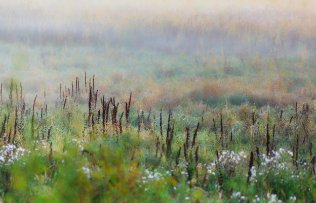 Foggy meadow along the Tawayik Lake Trail during sunrise at Elk Island National Park, Alberta landscapes. Copy space horizontal.