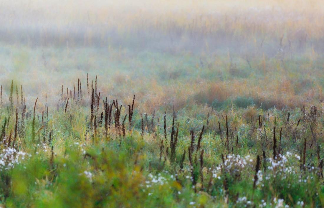 Foggy meadow along the Tawayik Lake Trail during sunrise at Elk Island National Park, Alberta landscapes. Copy space horizontal.