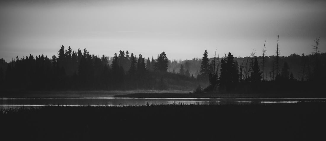 Astotin Lake Islands during a light foggy, autumn sunrise at Elk Island National Park, black and white Alberta landscapes.