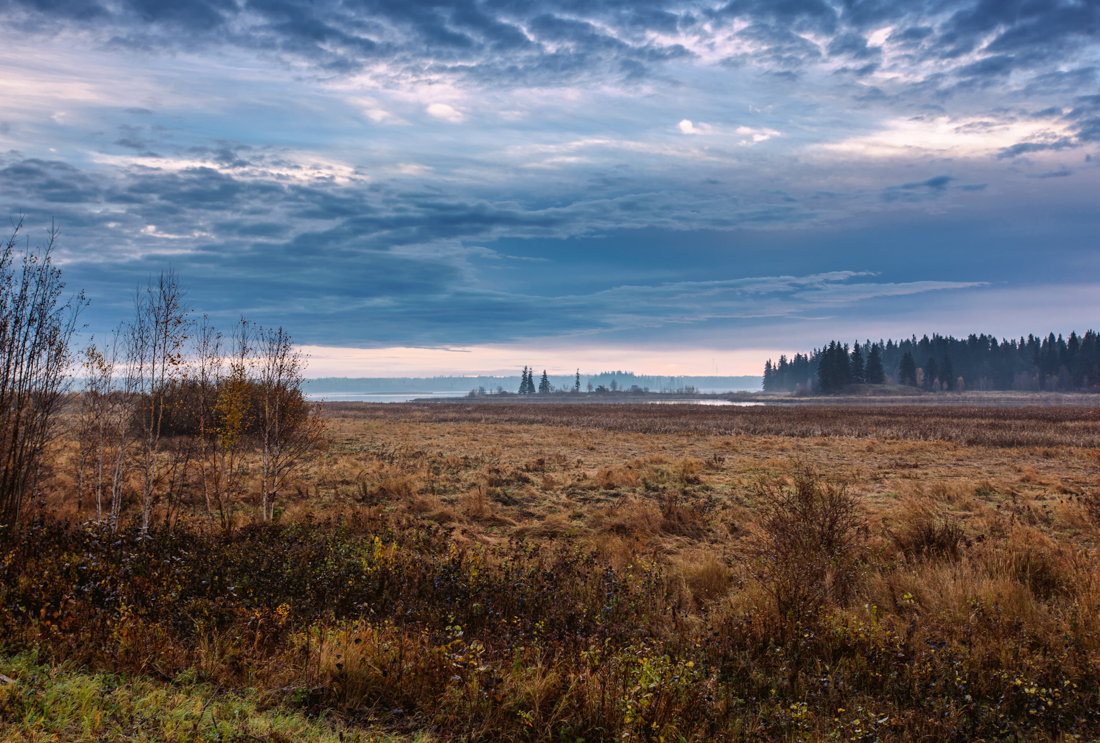 Mid-autumn thick brush and vegetation with the Astotin Islands in the background right after dawn at Elk Island National Park, Alberta landscapes. Copy space horizontal.