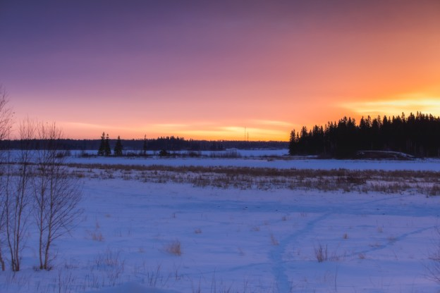Winter sunrise over the snowy field at Elk Island National Park with various animal tracks visible across the snow, Alberta landscape. Copy space horizontal.