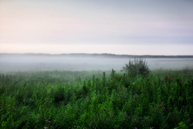 Foggy early summer morning at Elk Island National Park, Alberta landscape and wildlife habitat.