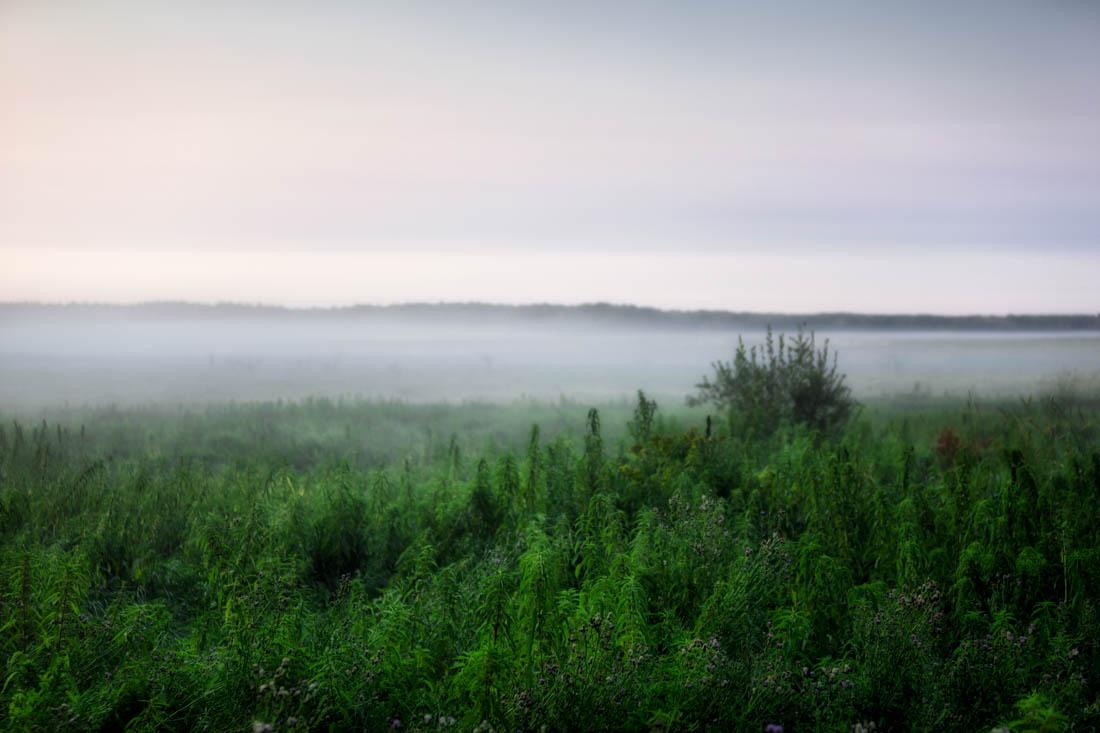 Foggy early summer morning at Elk Island National Park, Alberta landscape and wildlife habitat.