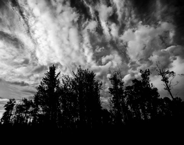 Black and white landscape of trees and clouds, summer evening.