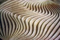 Curve9