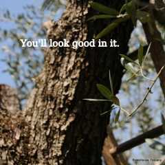 Image of an olive tree with the caption 'you'll look good in it' this happened when the computer crashed and woke up creative!