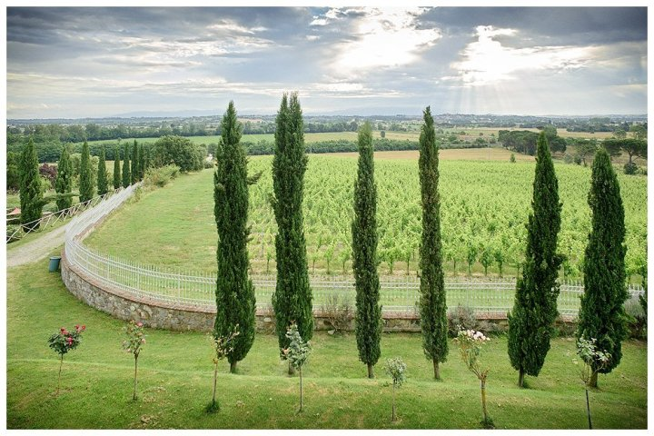 Image showing a view from the cortona room at siena house boutique hotel in tuscany the view is of a vineyard in june with a line cypress trees in the foreground and also in the distance along a driveway showing dramatic sky and rose trees on the lawn in the foreground