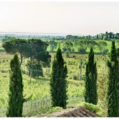 Image showing a view over a roof top the roof top is the summer kitchen at siena hosue boutique not a hotel in tuscany and the view of green fields and pine trees with cypress trees in the foreground is a view near typical of the heart of tuscany countryside