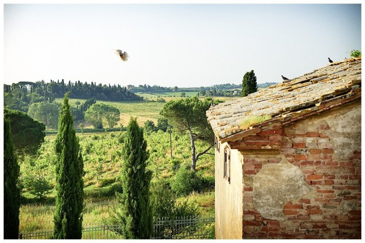 Image showing the roof of an unrestored builidng in tuscany part of the siena house boutique hotel estate and farm complex showing in the back ground the view of fields and vineyard and the cypress trees within the property in the foreground a pigeon is flying from the roof photo by Rene Rickli
