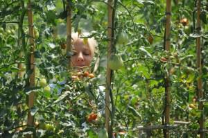 Image of Amanda Helen Atkins picking Tomatoes at Siena House, Tuscany.