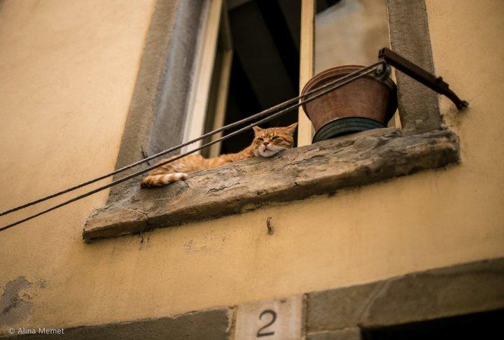cortona the cat on the windowsill